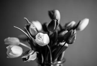 Gabriele Brummer, Tulip (Germany, Europe)