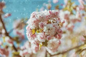 Andrea Hansen, Blüten im Frühling (Deutschland, Europa)