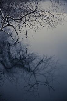 Andrea Hansen, Baumspiegelung (Deutschland, Europa)