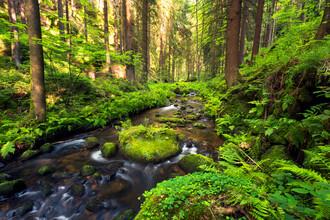 Dave Derbis, A River Runs Through It (Czech Republic, Europe)