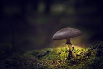 Oliver Henze, Kleiner Waldpilz leuchtet in der Nacht (Deutschland, Europa)