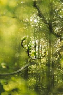 Nadja Jacke, Spring in the Teutoburg Forest (Germany, Europe)