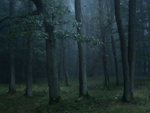 Eichenwald - fotokunst von Felix Wesch
