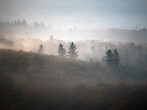 Felix Wesch, Herbst (Deutschland, Europa)