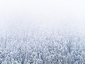 Felix Wesch, Winterwald (Deutschland, Europa)