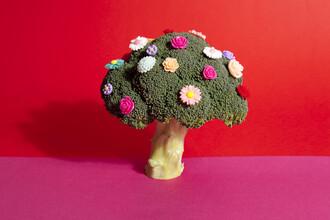 Loulou von Glup, Poetry of a tree in bloom (Belgien, Europa)