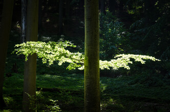 Martin Koch, Buche fliegt der Sonne entgegen (Deutschland, Europa)