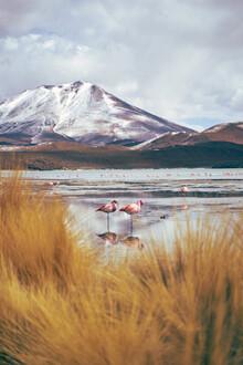 Marvin Kronsbein, Flamingopärchen (Bolivien, Lateinamerika und die Karibik)