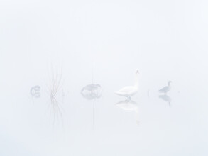 Felix Wesch, Im dichten Nebel (Deutschland, Europa)