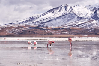 Marvin Kronsbein, Line of Flamingos (Bolivia, Latin America and Caribbean)