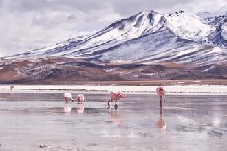 Marvin Kronsbein, Flamingolinie (Bolivien, Lateinamerika und die Karibik)