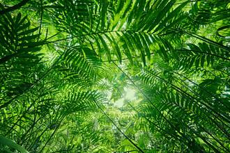 Marvin Kronsbein, Das Dschungeldach (Nicaragua, Lateinamerika und die Karibik)