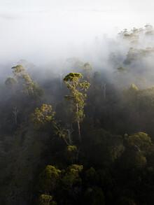 Frida Berg, Foggy Tasmania (Australia, Oceania)