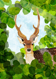 Katherine Blower, fallow Deer (Großbritannien, Europa)