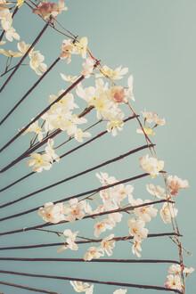 Pascal Deckarm, Kirschblüten (Japan, Asien)