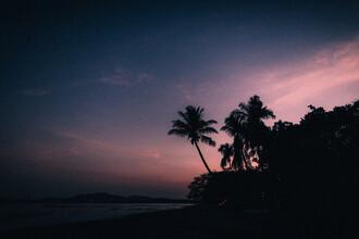 Stefan Sträter, Palm Trees (Costa Rica, Lateinamerika und die Karibik)