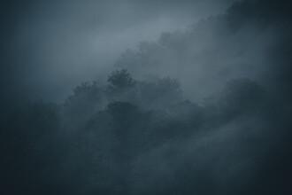 Franz Sussbauer, Misty Forest (Germany, Europe)