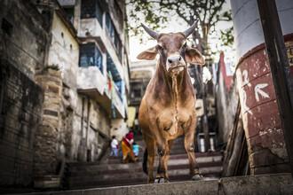 Andreas Adams, INCREDIBLE INDIA (India, Asia)
