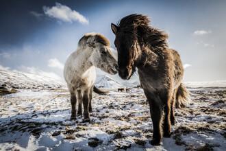 Andreas Adams, LOVE (Iceland, Europe)