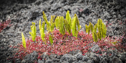 Andreas Adams, FLOWER ISLAND (Vereinigte Staaten, Nordamerika)
