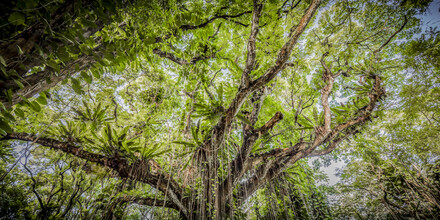 Andreas Adams, TREE OF LIFE (United States, North America)