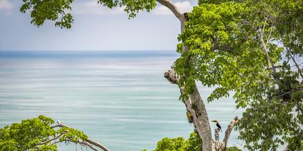 Andreas Adams, OCEAN TREE (Costa Rica, Lateinamerika und die Karibik)