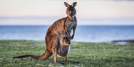 Andreas Adams, SUNSET BABY (Australia, Oceania)