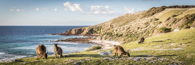 Andreas Adams, KANGAROO ISLAND (Australien, Australien und Ozeanien)