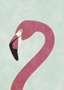 Daniel Coulmann, FAUNA Flamingo (Äthiopien, Afrika)