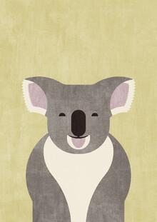 Daniel Coulmann, FAUNA Koala (Australien, Australien und Ozeanien)
