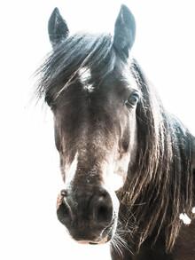 Victoria Frost, Horse (Großbritannien, Europa)