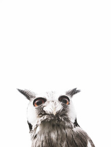 Victoria Frost, Lil Owl (Großbritannien, Europa)