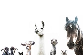 Victoria Frost, Animal Crew (Großbritannien, Europa)