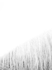Victoria Frost, White Horse (Großbritannien, Europa)