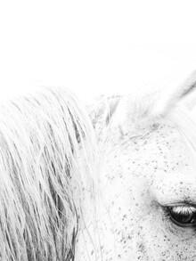 Victoria Frost, White Horse II (Großbritannien, Europa)
