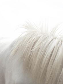 Victoria Frost, Horses Mane (Großbritannien, Europa)