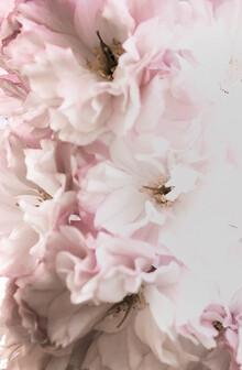 Victoria Frost, Pink Flowers (Großbritannien, Europa)