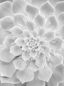 Victoria Frost, White Succulent (Großbritannien, Europa)