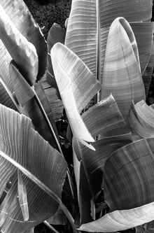 Victoria Frost, Palms (Spanien, Europa)