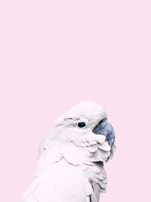 Victoria Frost, Pink Cockatoo (Indonesia, Asia)