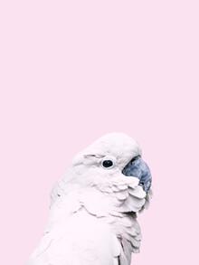 Victoria Frost, Pink Cockatoo (Indonesien, Asien)