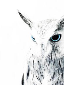 Victoria Frost, Owl II (Großbritannien, Europa)
