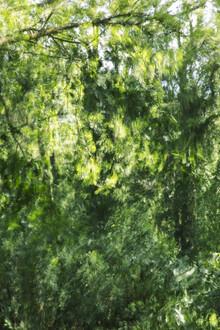 Nadja Jacke, Buchenlaub vom Winde verweht (Deutschland, Europa)