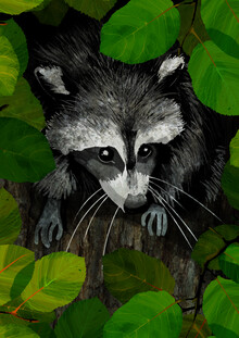 Katherine Blower, Raccoon (United Kingdom, Europe)