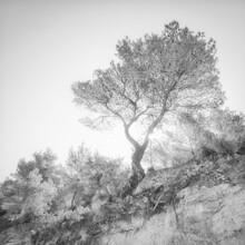 Dennis Wehrmann, the lonely tree - an ibizian impression (Spain, Europe)