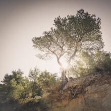 Dennis Wehrmann, der einsame baum - eine ibizenkische impression (Spanien, Europa)