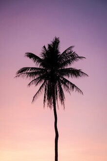 Christian Hartmann, Lonely Palm (United States, North America)