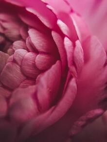 Christian Hartmann, Macro Flower (Germany, Europe)