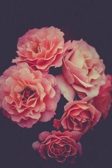Christian Hartmann, Dark Moody Roses (Germany, Europe)