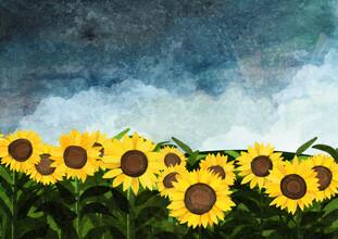 Katherine Blower, Sunflowers (Großbritannien, Europa)